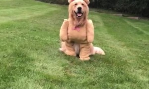 Dog Shows Off Cute Teddy Bear Costume
