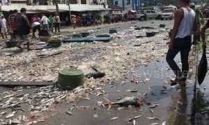 Truck spills thousands of fish sparking frantic scenes as locals try to collect them