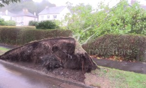 Storm Callum havoc leaves seaweed on cars, over-turned boats and fallen trees in Cornwall