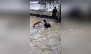 Brave teenagers rescue stray dog stranded in dirty canal