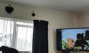 Dog Loves Watching TV