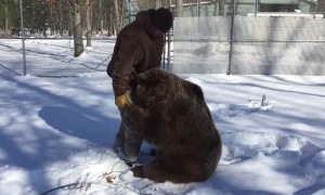 Playtime With the Bears