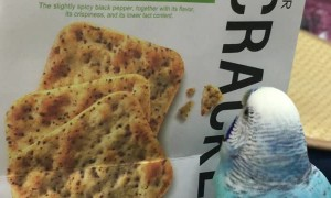 Polly Want a Picture of a Cracker?