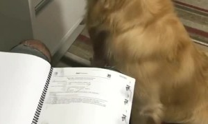 Dog Helps Turn The Page