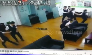 Python drops from ceiling onto staff in China bank