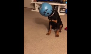 This dog accidentally turned himself into a halloween decoration