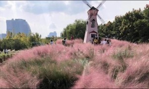 Selfie-mad tourists in China destroy rare pink grass field