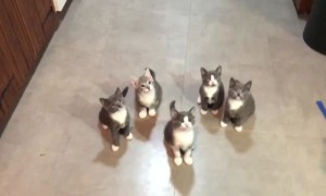 Just TRY Not to Smile at These Funny Kittens