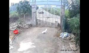 Dogs flee as out-of-control SUV demolishes house gate