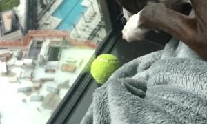 Edgy Tennis Ball Dilemma