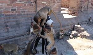 Monkey photographers hard at work