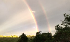 Sun Rays and Rainbows Create Beautiful Combination
