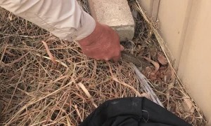 Man Retrieves Fleeing Snake From Under Fence