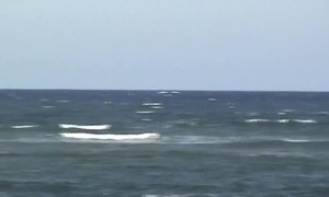 Whales Breach Near Beach