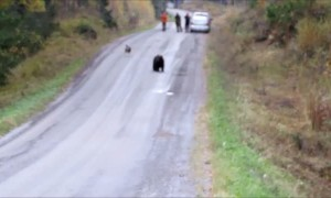 "Friendly dog decides to play ""tag"" with a wild bear"