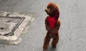 Dog Goes for a Different Type of Run