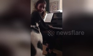 Just call her Feline Dion! Cat nails 'My Heart Will Go On' rendition