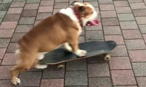 Skateboarding Pooch