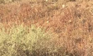 Hundreds of Elk Run Across Colorado Road