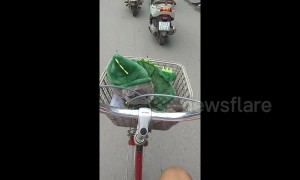 Pet cat in Halloween costume rides in bicycle basket