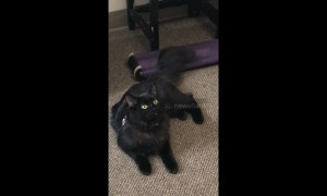 Cat Learns she is adopted
