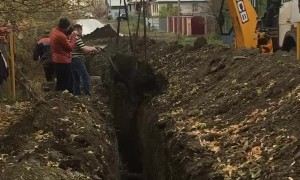 Cow Trapped in Construction Trench