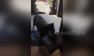 This dog loves fetching the mail