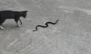 Cat Versus Snake