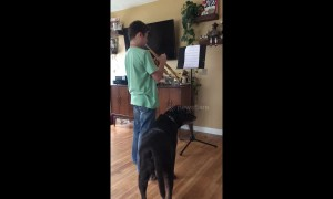 This puppy adores his owner's trumpet playing
