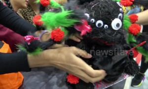 Cute dogs dress up for Halloween