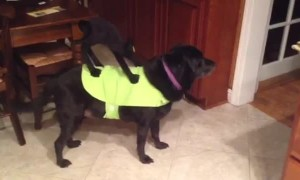 Dog shows off hilarious Halloween costume