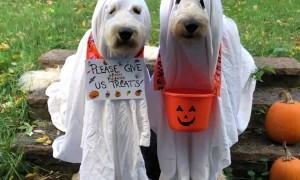 Doodle Duo Trick-Or-Treating