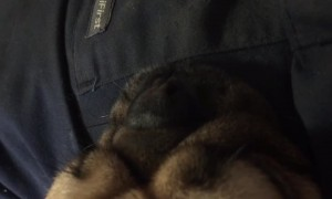 Listen to this Pug's CRAZY Snore
