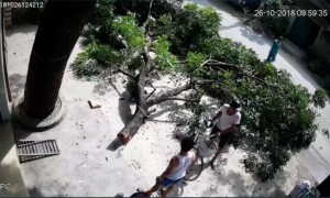 Spontaneous Tree Branch Collapse