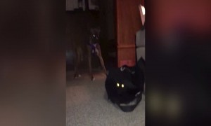 Funny Dog Lets Cat out of the Bag!