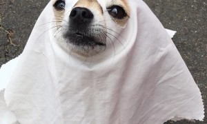 Howloween Ghost