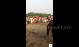 Horse loses control and tramples over crowd of spectators