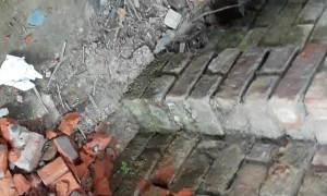 Dog Rescued From Behind Brick Wall