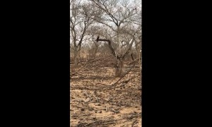 Leopard takes down baby antelope in lightning-fast attack in South Africa