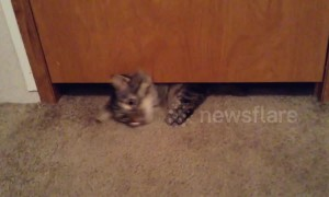 Adorable cat successfully squeezes himself under tiny gap below door