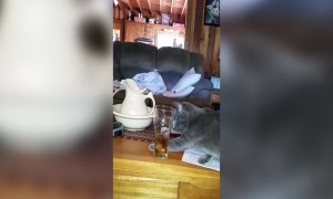 Kitty has Fancy Footwork Around Drinking Glass