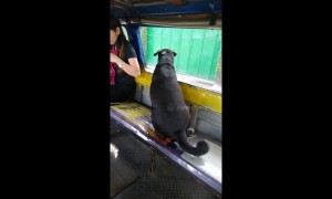 Adorable dog takes solo bus ride to chase owner going to work