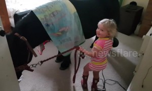 Three-year-old gives Shetland pony a blow dry in Mummy's bedroom