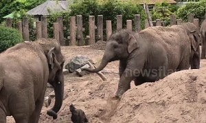 Two baby elephants at Chester Zoo die after contracting virus