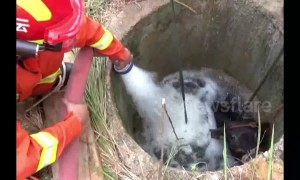 Firefighters pour water into well to rescue buffalo