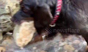 Dog definitely fetches wrong rock