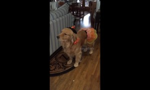 Unimpressed dog in costume gives owner silent treatment