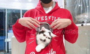 A hoodie designed for pet lovers and lazy cats
