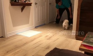 Maltese mix loves sliding on the floor