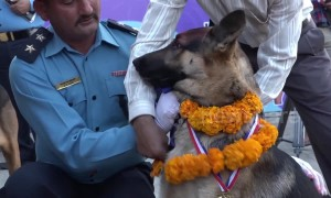 Nepal honours police canines in 'day of the dogs' festival